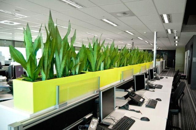 Chọn loại cây phù hợp với không gian chung của văn phòng