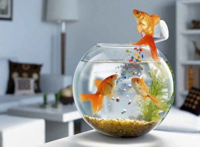 Có thể trang trí bàn làm việc người mệnh Mộc với bể cá mini