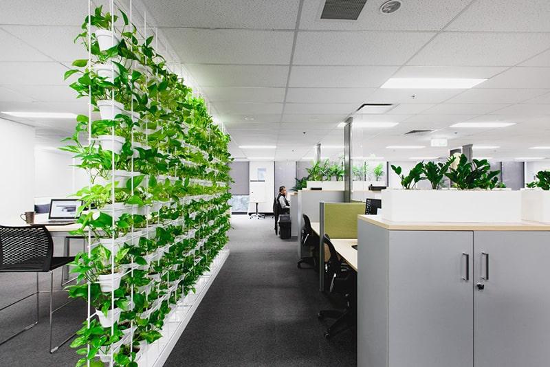 Không nên để cây to chặn cửa chính của văn phòng