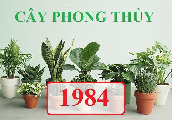Hoa và cây cảnh cho nữ tuổi Giáp Tý 1984
