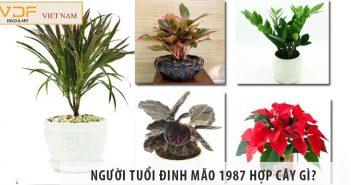 Người tuổi Đinh Mão 1987 hợp cây gì khi đặt trên bàn làm việc