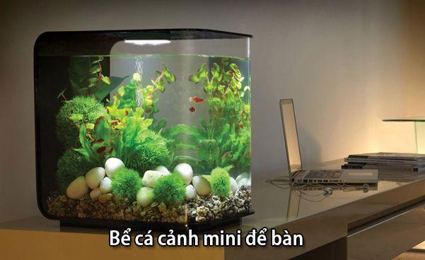 Bể cá mini để bàn hợp tuổi Kỷ Tỵ