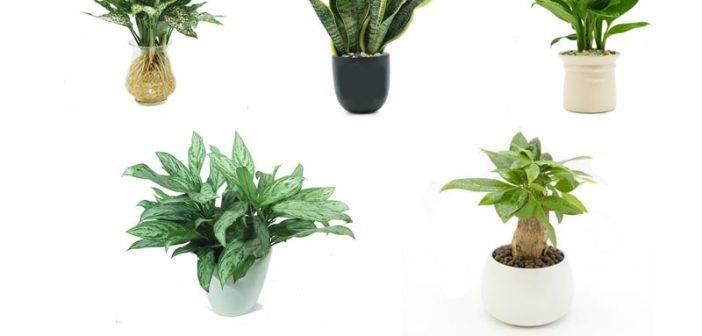 5 loại cây phong thủy giúp tuổi Giáp Tý gặp nhiều may mắn