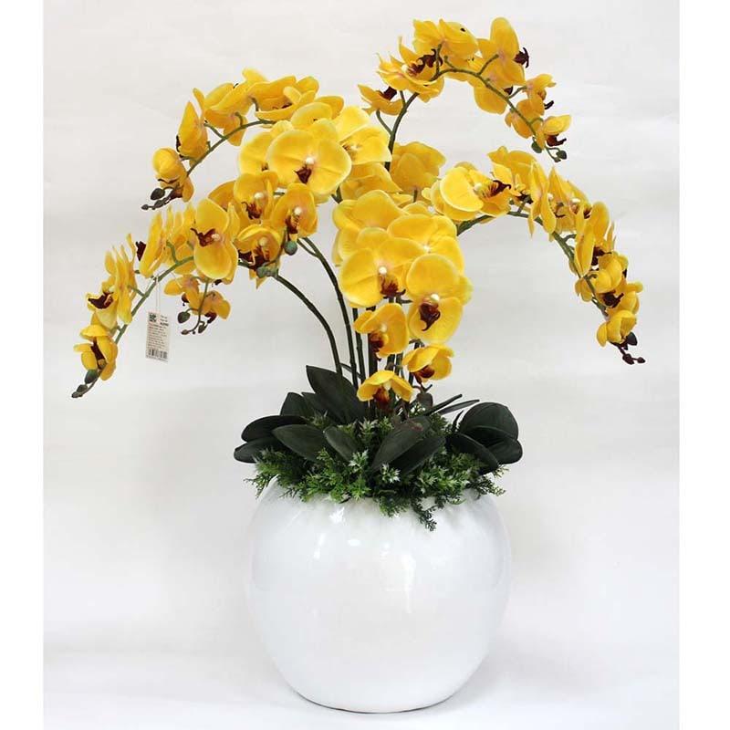 Đặc điểm của hoa lan hồ điệp vàng